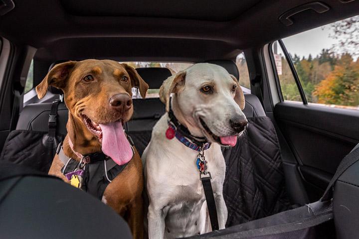 tips-para-viajar-mascotas-evitar-accidentes-asiento-trasero