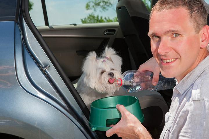 tips-para-viajar-mascotas-evitar-accidentes-lleva-suficiente-comida-y-agua