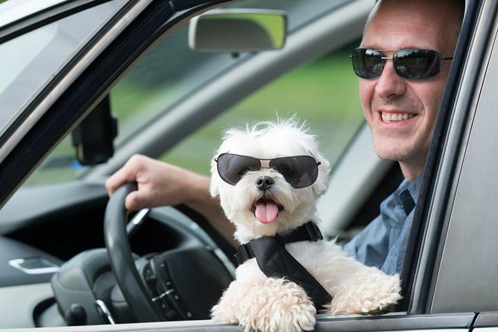tips-para-viajar-mascotas-evitar-accidentes-portada
